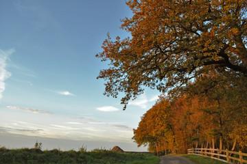 Herbstlicher Weidezaun mit bunten Bäumen