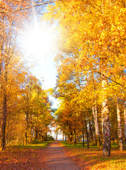 Yellow Trees Forest Landscape