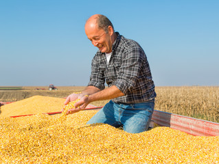 Happy smiling farmer during corn maize harvest