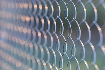 wire netting, netting