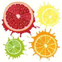 Set of citrus fruit - grapefruit, orange, lime and lemon. Hand d