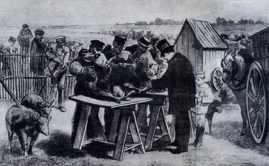 Pasteur performing anthrax vaccination; Pouilly-le-Fort 1881