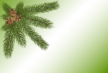 green fir twig with three brown cones on light background