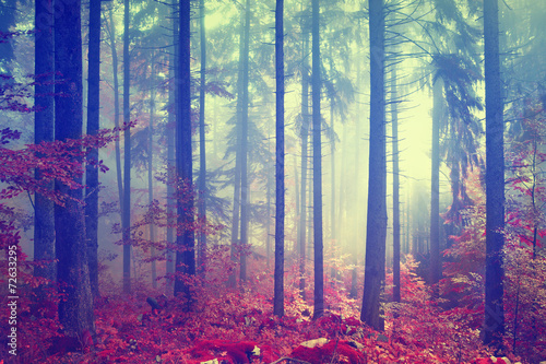 Wall mural Magic color vintage forest