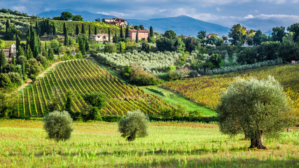 Vineyards and olive trees in a small village, Tuscany Fototapete
