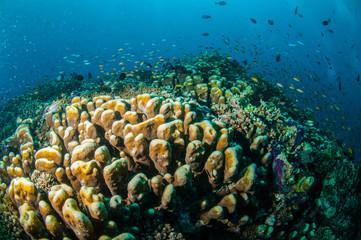 Keuken foto achterwand Koraalriffen Various reef fishes, Gili Lombok Nusa Tenggara Barat underwater