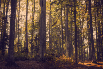 Forest during autumn. Color graded to look vintage