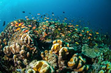 Coral reef, fishes in Gili Lombok Nusa Tenggara Barat underwater