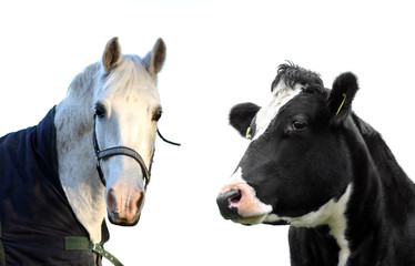 Cow and horse isolated!