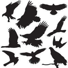 Raptors vector illustrations set of ten bird silhouettes