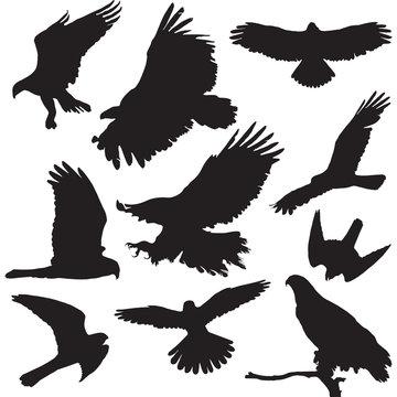 Raptors vector illustrations set of ten bird silhouettes