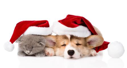 sleeping Pembroke Welsh Corgi puppy and kitten with red santa ha