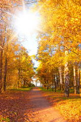 Autumn Park Forest Landscape