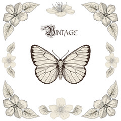 butterfly and flowers drawing vintage engraving style