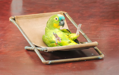 Colorful parrot performing on stage in circus.