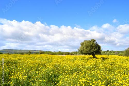 Panorama con prato fiorito albero di ulivo immagini e for Albero ulivo vettoriale