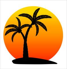 palm in sunrise