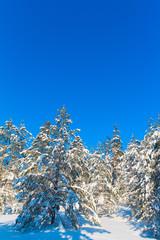 Joyful Happy Winter