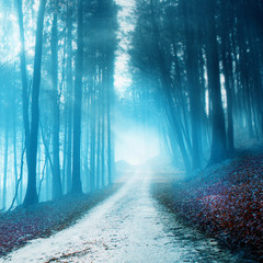 Wall Mural - Mystical blurry forest road