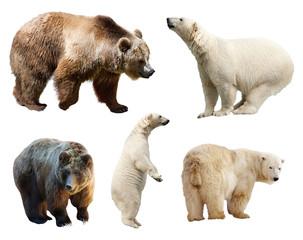 Fototapete - Set of bears. Isolated on white