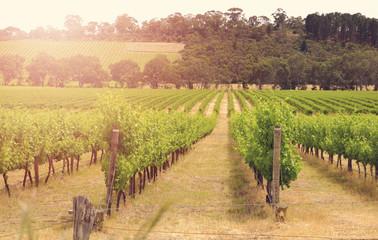 Fotobehang Wijngaard Rows of grapevines taken at Australia's McLaren Vale