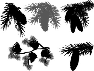 five fir and pine branches on white