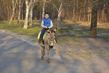 Boy riding on a donkey on the road.