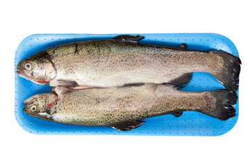 Fresh raw trout isolated on white background