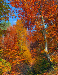 Autumn colorful trees