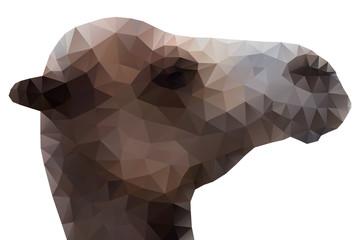 Camel Head, Vector Illustration