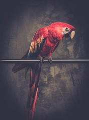 Wall Mural - Colourful parrot sitting on a perch