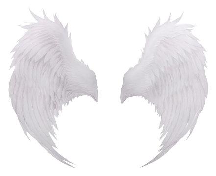 white birds wing feather,plumage isolated white background use f