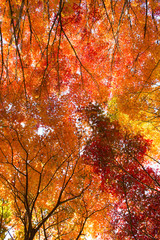 Wall Mural - The colors of autumn