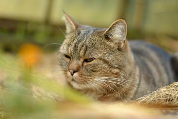 Resting domestic cat