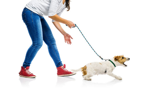 Dog on lead on walk with his owner