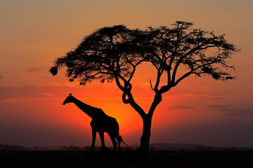 Aluminium Prints Silhouetted tree and giraffe against a red sunset
