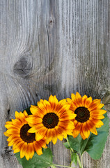 Old boards with sunflowers