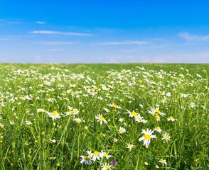 Green Horizon Summer Beauty Flowers Blooming