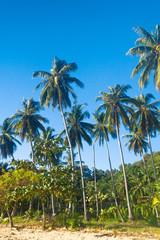 Green View Jungle Landscape