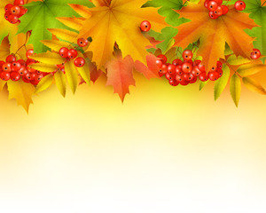 Autumn background or border, autumn leaves and berries