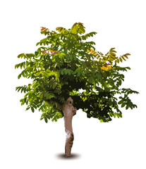Green tree. Vector