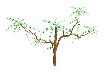 Dry Tree Leaves Branches