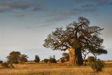 Poster Baobab African landscape