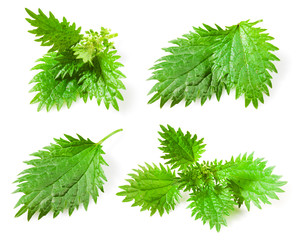 Nettle leaves isolated on white background. Collection
