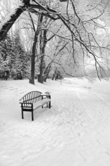 An empty bench in a snowy winter forest