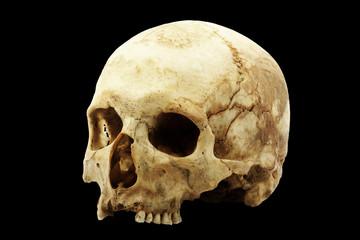 Genuine human skull isolated on black background