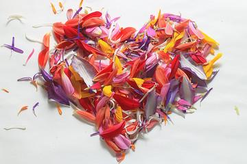 heart of flower petals flying