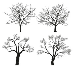 Winter Tree Silhouettes