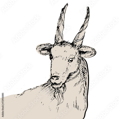 hand drawn sketch of goat new year card