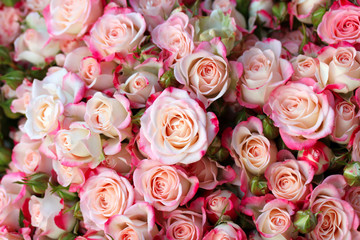 Roses background in the shop